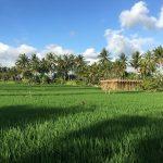 Bali_iPhone_2017 (16)