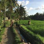 Bali_iPhone_2017 (18)