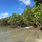 Cairns_iPhone_2017 (15)