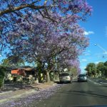 Sydney_iPhone_2017 (62)