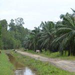 Borneo_Nikon_2018 (201)