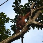 Borneo_Nikon_2018 (209)