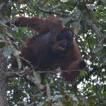 Borneo_Nikon_2018 (297)